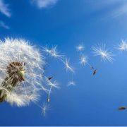 ¿Como prevenir alergias?
