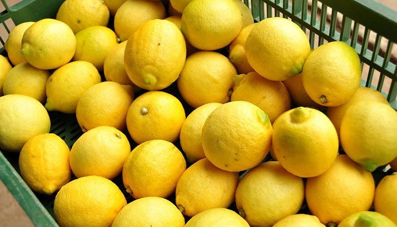Limones alcanzan su valor más bajo de los últimos 10 años